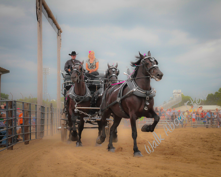 DRAFT HORSE SHOW 2013