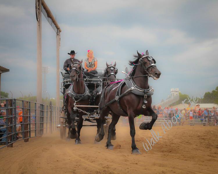 DRAFT HORSE SHOW 2013