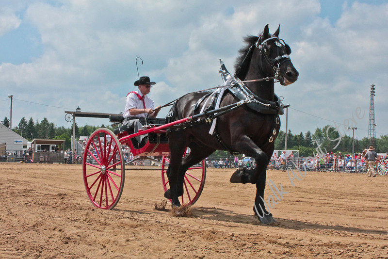 Draft Horse Show '11